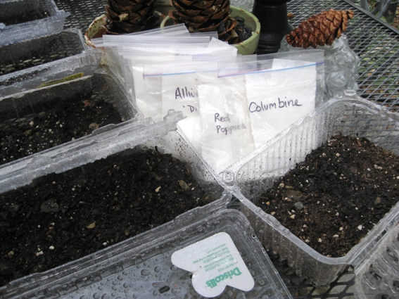 One type of seed for most boxes