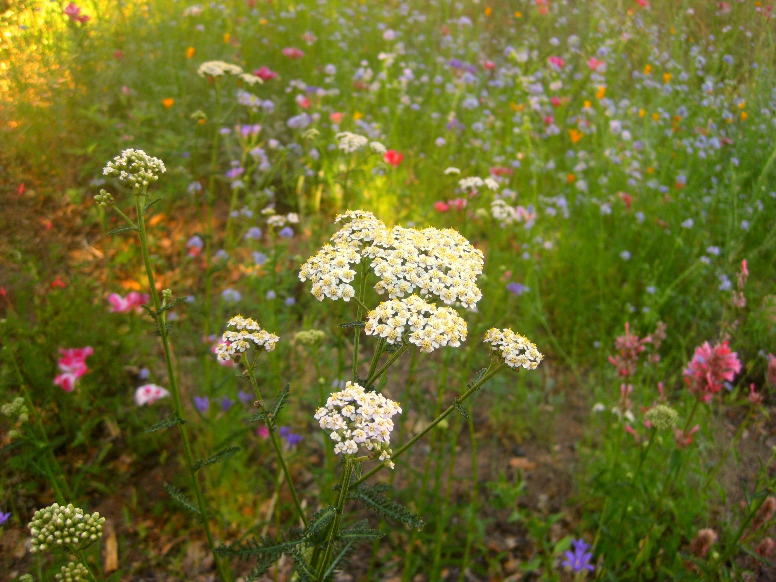 July meadow