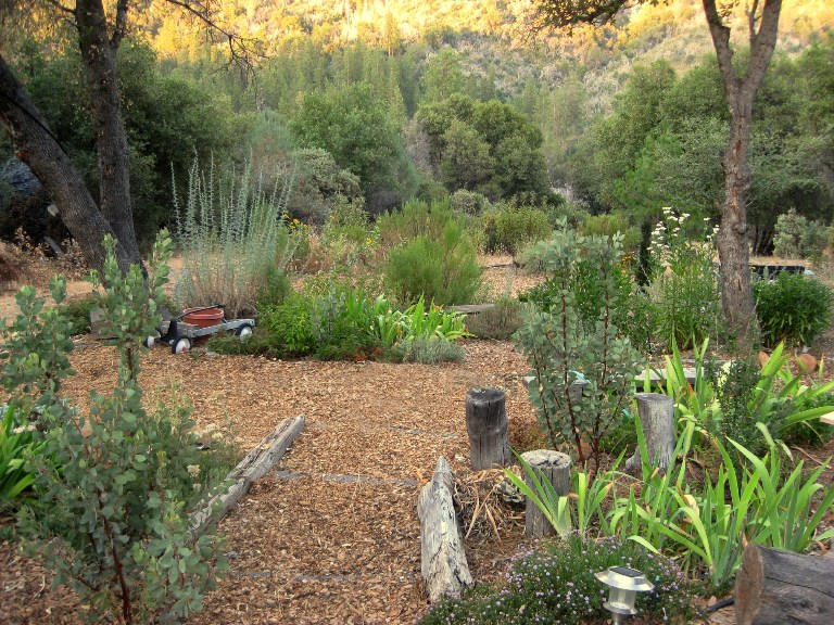 beds and paths are mulched to prevent weeds sierra foothill garden
