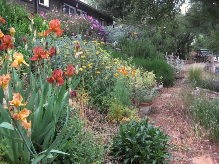 Secrets for a weed free garden