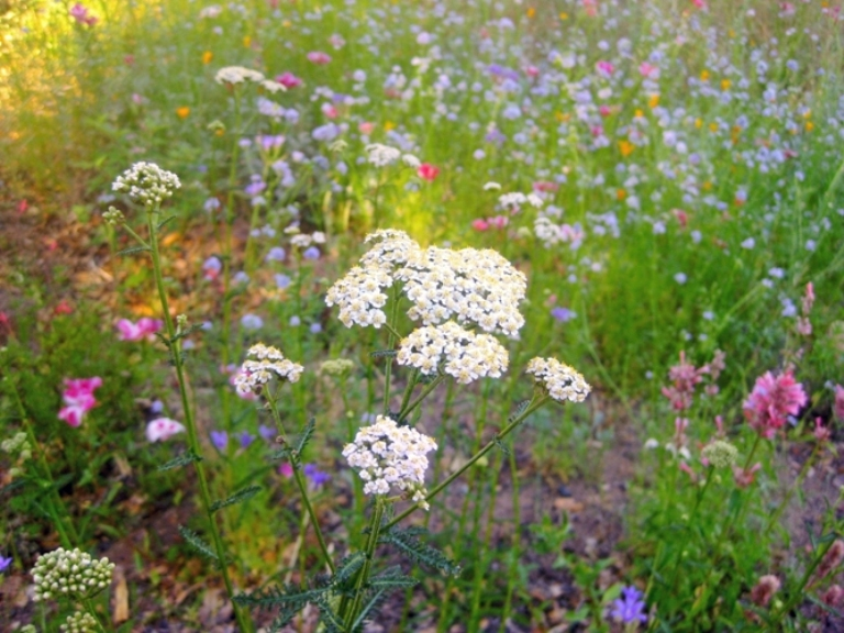 September: Time to plan a native CA meadow