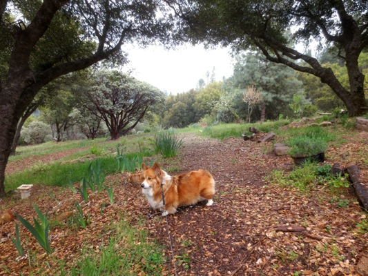 No squirrels yet..., Maggie says.  Our place is on a slope and we've reached the middle path, 'main intersection of the garden' which is our leach line and one of the only flat areas.  It's a good place for shallow rooted perennials and bulbs.