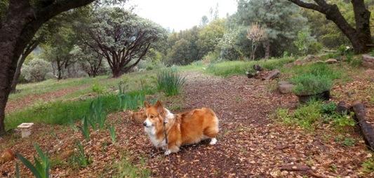 Rainy Spring Walk with Maggie