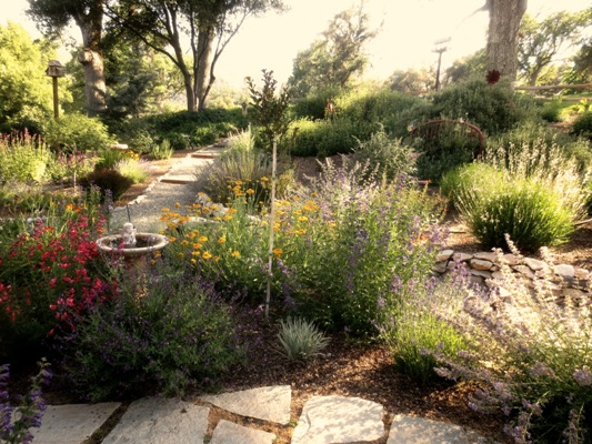 Penstemon, catmint, gaura,salvia and coreopsis