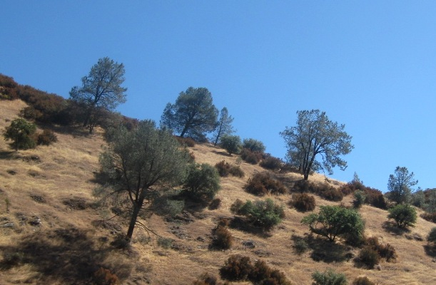 Typical coverage on the foothills