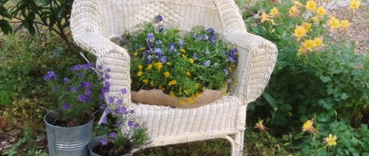 Planting in an old wicker chair