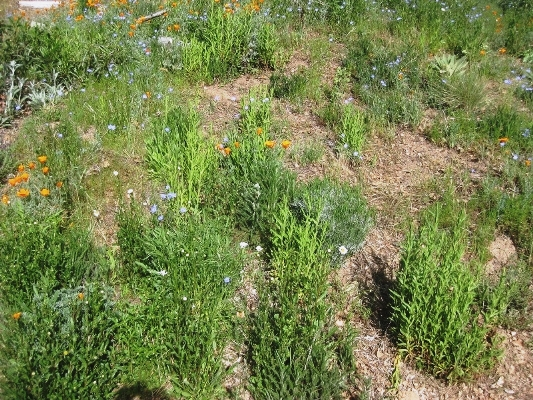 Cudweeds increased not because of the water, but because of the weeding.