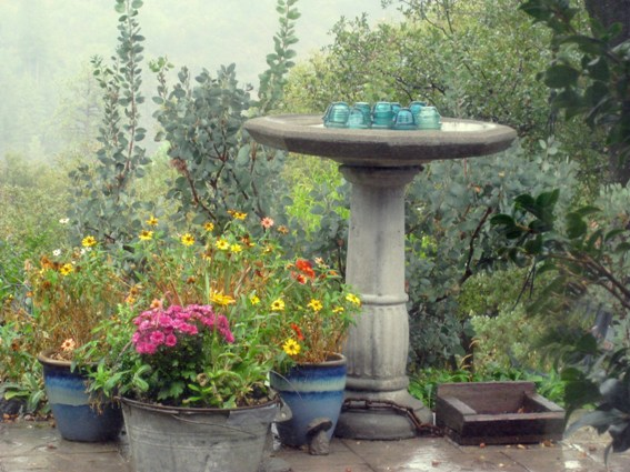 The birdbath is the birds' community center