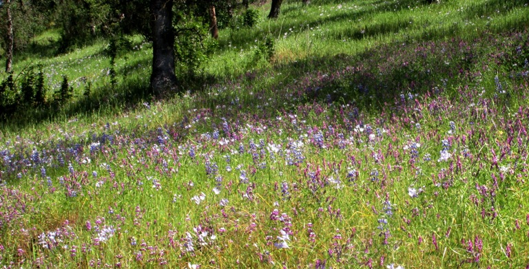 Spring wildflowers: The blues