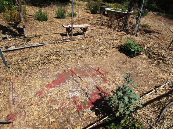 Last year's garden, raked and ready