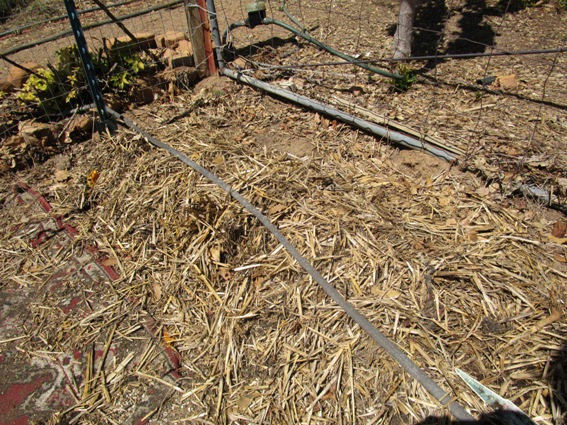 The old straw is mixed with the rich soil