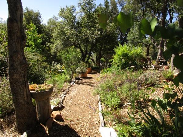 Walking through my June Garden