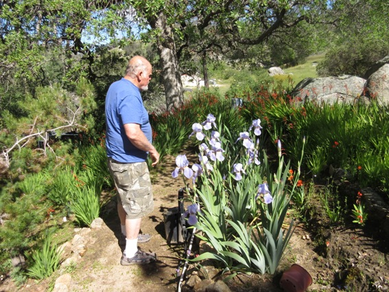 Bill Tyson points out a patch of old-fashioned Iris