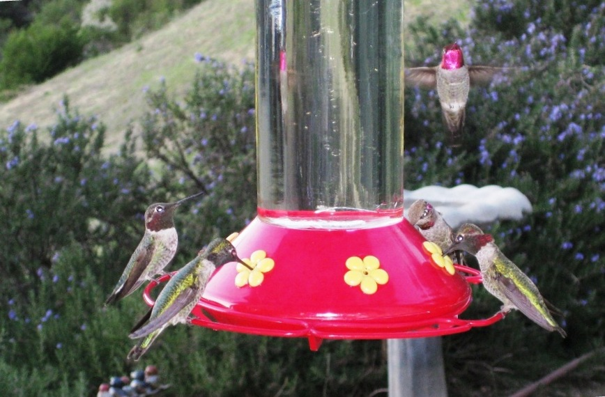 What do you call a group of hummingbirds? A charm!