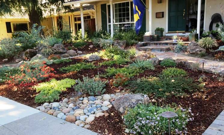 Lawn replacement by East Bay Wilds Native Plant Nursery