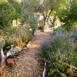 Path through my Fall garden