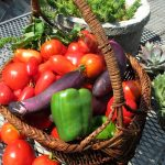4 Tomatoes, eggplant and peppers