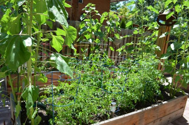Maters are getting there
