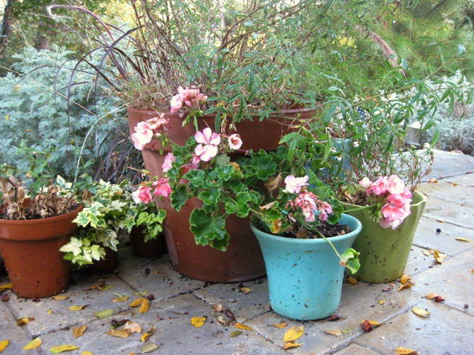 Clean up winter pots, ready for spring!