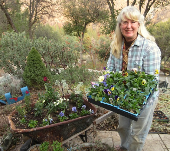 Plant winter annuals, like pansies, violas and snapdragons