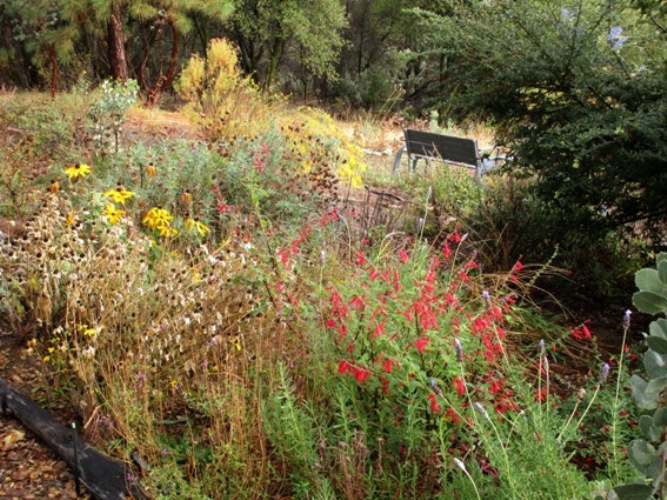 Prune perennials down to the thickest part of the plant OR leave seedheads for birds!
